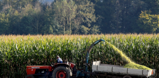 19 Pros and Cons of Agricultural Subsidies