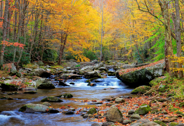 22 Pros and Cons of Living in Tennessee