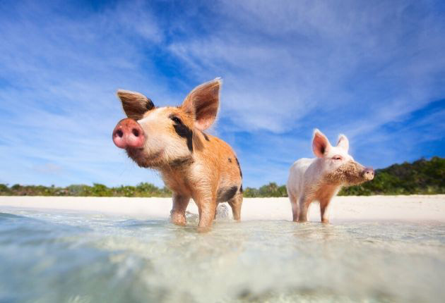 Pros and Cons of Living in the Bahamas